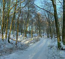 Winter at High Dam, Finsthwaite by Jamie  Green