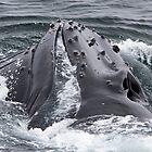 Humpback Whale by tara-leigh