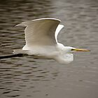 White Egret by Chris Heising