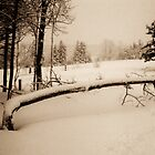 Mourning in Winter #1 (Fallen Tree) (Breadalbane, Prince Edward Island, Canada, December 2008) by Edward A. Lentz