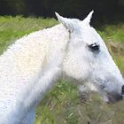 White Horse by Christopher Johnson