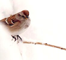 *AMERICAN TREE SPARROW* by Brenda Dow