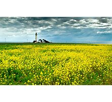 Pigeon Point Lighthouse & Mustard Field Photographic Print