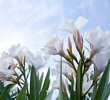 White Oleanders by MitchellT