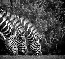 Three Heads Are Better Than One by Kathryn Potempski