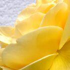 Yellow Petal Rose by Marina Raspolich