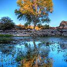 The Tree by Bob Larson
