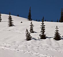Trees at Paradise, Mt. Rainier National Park by Barb White