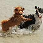 Dog Play by Dionne A. Ward