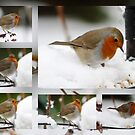 Robin Collage by AnnDixon