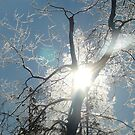 Frosty Sun Beams by MaeBelle