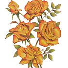 Orange roses on white by FranEvans