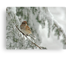 Tree Sparrow in Snow Storm Canvas Print