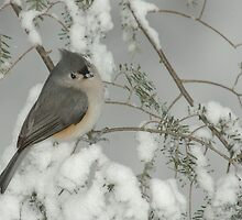 Tufted Titmouse in Snow Storm by Michael Mill