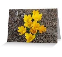 PROOF Groundhog Was WRONG! Spring Has SPRUNG!! Greeting Card