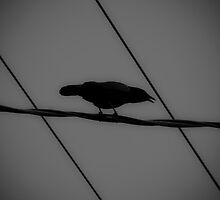 Rule of Crows by Jason Lee Jodoin