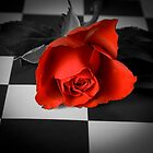 Rose on the chessboard  by Brian Stark