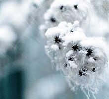 The frozen ones by Michel Raj