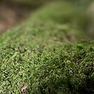 the moss grows green by paula cattermole