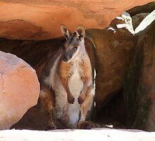 Rock a by Wallaby by Gabrielle  Lees