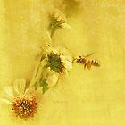 Gathering Pollen by CarolM