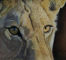 Lion(ess) Eyes by Marlene Piccolin