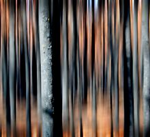 Kinglake Fires redux by Greg Carrick