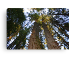 Giants Reaching for the Sky Canvas Print