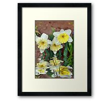 Daffodil Reflections Framed Print