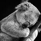 Wake Me Later - Sleeping Koala by David Morgan-Mar