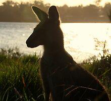 Enjoying the Sunset (Jervis Bay) by BGpix