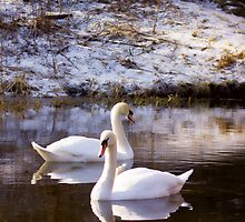 Swan Lake by Lynne Morris