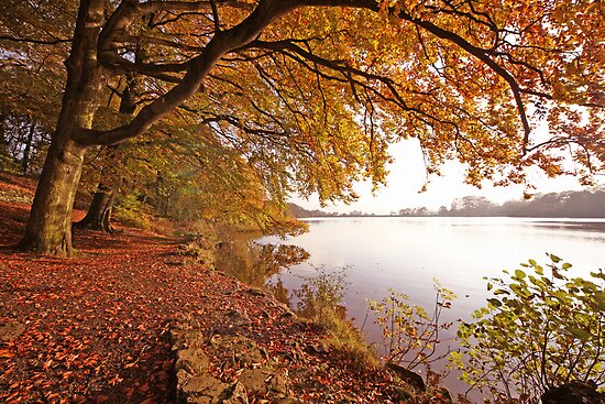 Autumn Pool by John Keates
