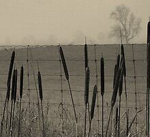 A Dripping Fence... by Larry Llewellyn