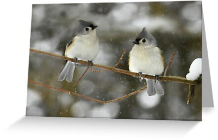 Waiting for Spring by Lori Deiter