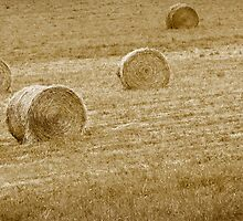 Wheat Bales by snehit
