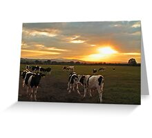 The Herd at Sunset Greeting Card