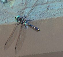 Urban Dragonfly by rjmp