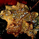 After the rain by Dawn Barger