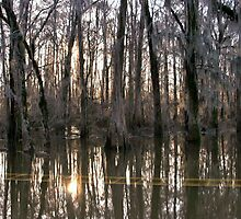 Late Afternoon at Caddo Lake by Susan Russell