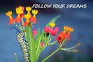 """""""Follow Your Dreams"""" greeting card by AuntDot"""