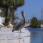 Birds in the Keys by aura2000