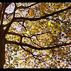 An autumn tree by amylw1