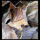 Ladybird on a leaf by amylw1