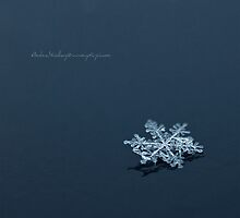 Snowflake by Andreas Stridsberg