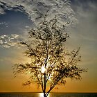 Silhouette of a tree in Darwin by pixelninja3000