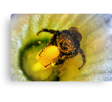 OOOOH! Honey Honey!! Metal Print