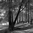 Forest in Spain 1 by marcopuch
