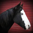 Blue Eyed Black and White Paint Horse by livinginoz