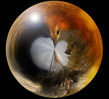 Robin in a Ball by Chris Clark
